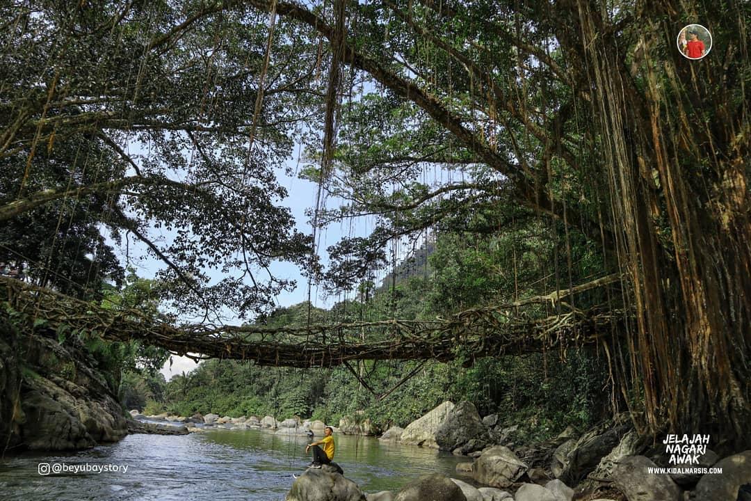 Jembatan Akar Bayang