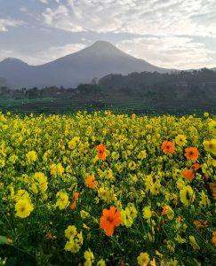 5 Destinasi Wisata Alam di Mojokerto, Selandia Barunya Jawa Timur
