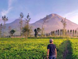 5 Hal Menyenangkan yang Bisa Dilakukan di Agrowisata Tambi Wonosobo